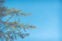Hintergrund des blauen Himmels des Herbstlaubs Stockbilder