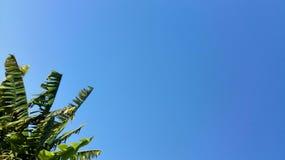 Hintergrund des blauen Himmels mit Bananenstaude Stockfotografie