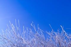 Hintergrund des blauen Himmels und des Busches mit Reif Stockbild
