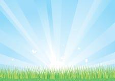 Hintergrund des blauen Himmels und des grünen Grases Stockfotos