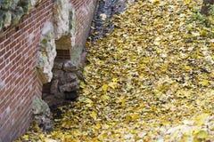 Hintergrund des bunten goldenen Herbstlaubs aus den Grund Stockbild