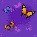 Hintergrund des bunten Schmetterlingsfliegens Stockfotografie