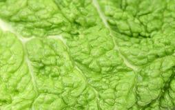 Hintergrund des Chinakohls des grünen Blattes. Lizenzfreie Stockbilder