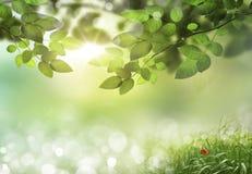 Hintergrund des Frühlinges oder abstrakter der Natur der Sommersaison Stockfotografie