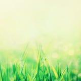 Hintergrund des Frühlinges oder abstrakter der Natur des Sommers Lizenzfreies Stockfoto