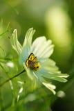 Hintergrund des Frühlinges oder abstrakter der Natur des Sommers Lizenzfreie Stockfotos
