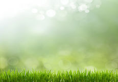 Hintergrund des Frühlinges oder abstrakter der Natur der Sommersaison Stockbilder
