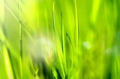 Hintergrund des Frühlinges und abstrakter der Natur des Sommers mit Gras und Sonne Lizenzfreies Stockbild