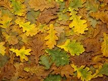 Hintergrund des gefallenen Herbstlaubs. Lizenzfreie Stockfotografie