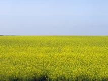 Hintergrund des gelben Feldes und des blauen Himmels Stockbild