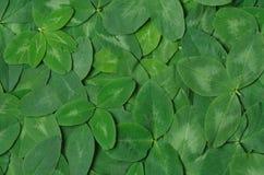Hintergrund des grünen Blattklees lizenzfreie stockbilder