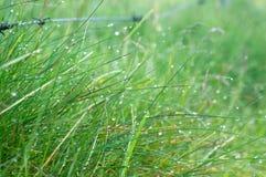 Hintergrund des grünen frischen Grases morgens bedeckt mit Tau stockfotografie