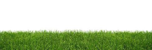 Hintergrund des grünen Grases Stockfoto