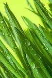 Hintergrund des grünen Grases Stockbilder