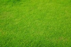 Hintergrund des grünen Grases Stockbild