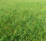 Hintergrund des grünen Grases Lizenzfreies Stockfoto