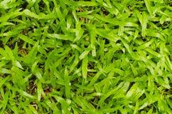 Hintergrund des grünen Grases Lizenzfreie Stockbilder