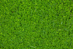 Hintergrund des grünen Grases Lizenzfreies Stockbild
