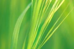 Hintergrund des grünen Grases auf dem Feld an einem hellen Tag Lizenzfreie Stockfotografie