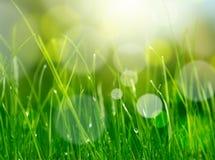 Hintergrund des grünen Grases des Unschärfe Lizenzfreies Stockfoto