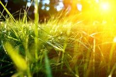 Hintergrund des grünen Grases, getonte helle Grasnahaufnahmeansicht mit Sonnenstrahlen und Blendenfleck Stockbilder