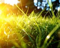 Hintergrund des grünen Grases, getonte helle Grasnahaufnahmeansicht mit Sonnenstrahlen und Blendenfleck Lizenzfreies Stockfoto