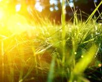 Hintergrund des grünen Grases, getonte helle Grasnahaufnahmeansicht mit Sonnenstrahlen und Blendenfleck Stockfotos