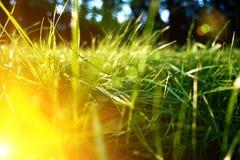 Hintergrund des grünen Grases, getonte helle Grasnahaufnahmeansicht mit Sonnenstrahlen und Blendenfleck Lizenzfreies Stockbild