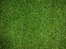 Hintergrund des grünen Grases groß Stockfotografie