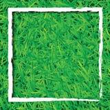 Hintergrund des grünen Grases mit weißem Rechteck Stockfoto