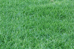 Hintergrund des grünen Grases - 1. September 2017 Lizenzfreies Stockbild