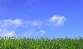 Hintergrund des grünen Grases und des blauen Himmels Lizenzfreies Stockfoto