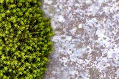Hintergrund des grünen Mooses und des Steins lizenzfreies stockbild