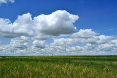 Hintergrund des Grases und der Wolken lizenzfreie stockfotos