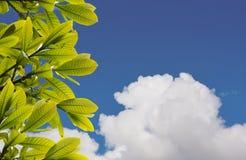 Hintergrund des Grases und des blauen Himmels Lizenzfreie Stockfotografie