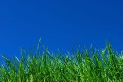 Hintergrund des Grases und des Himmels Lizenzfreie Stockbilder