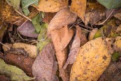 Hintergrund des Haufens der trockenen Blätter stockfoto