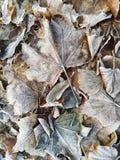 Hintergrund des Herbstlaubs im Frost Stockfoto
