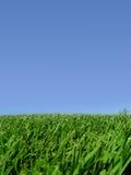Hintergrund des Himmels und des Grases Stockbild
