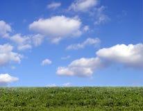 Hintergrund des Himmels und des Grases Lizenzfreie Stockfotografie