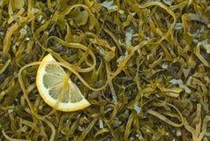 Hintergrund des Kelps und kleine Scheibe der Zitrone Stockfoto