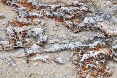 Hintergrund des korallenroten Sediments versteinert stockfoto