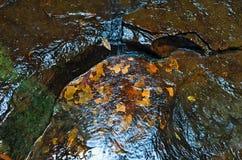 Hintergrund des nassen Felsens mit gelb-orangeen Mustern Stockfotografie