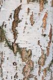 Hintergrund des Rindenbaum-Birkenholzes Stockbilder