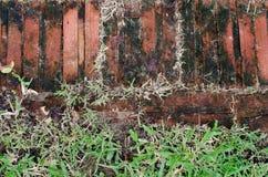 Hintergrund des roten Backsteins und des grünen Grases Stockfoto