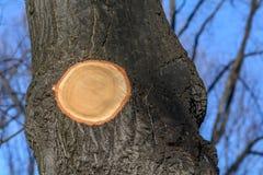 Hintergrund des schwarzen Herbstbaumstammes Baumstamm mit Kreiscu Lizenzfreies Stockbild