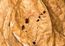 Hintergrund des trockenen Blattes in der Natur Nahaufnahme Stockbilder