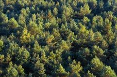 Hintergrund des Waldes Stockfoto