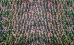 Hintergrund des Waldes mit Baummuster Stockfotos