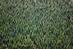 Hintergrund des Waldes mit Baummuster Lizenzfreies Stockbild